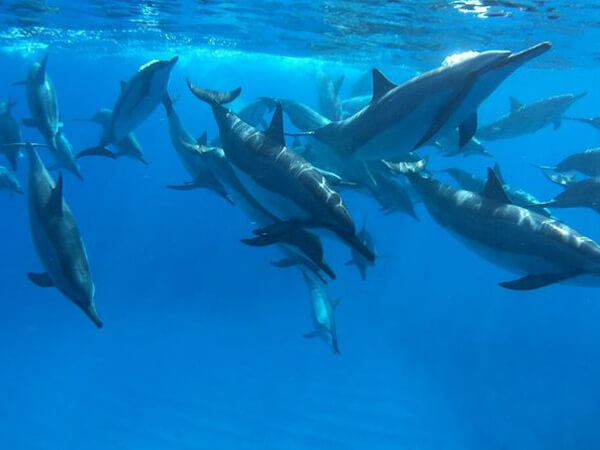 Big Island: Eco-Friendly Snorkel & Dolphin Watching Tour