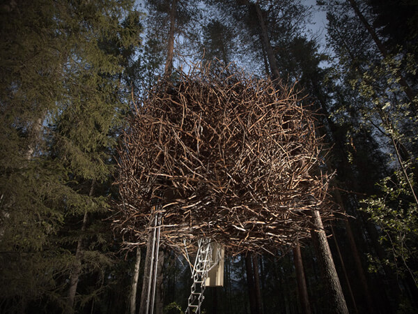 The Bird's Nest - Treehotel